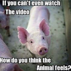 If you are repulsed by seeing what happens to animals in factory farms and cant watch it why is it ok to support it