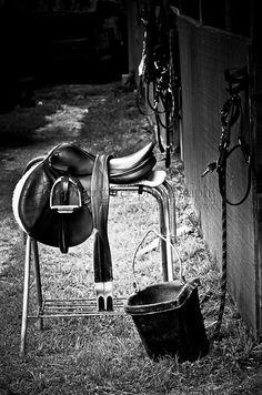Brings back wonderful memories of horseback riding