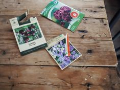 Listan – 5 ettåriga sommarblommor som man inte vill vara utan | Elin Lannsjö Magnolia, Gift Wrapping, Flowers, Gifts, Gift Wrapping Paper, Presents, Magnolias, Wrapping Gifts, Favors