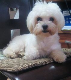 Programări : 0755806532 Florina : SARA - salon cosmetica, coafura si frizerie canina / felina
