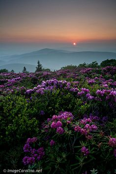 Grassy Ridge, in the Roan Highlands, North Carolina taken by Daniel Burleson.