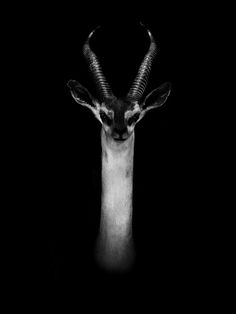 Dramatic Black and White Portraits of Exotic Animals