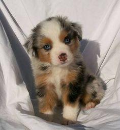 puppies:(