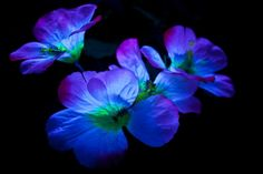 How Can I Make My Flowers Glow In The Dark
