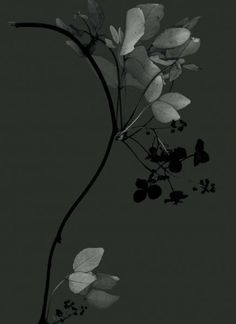 Sandra Kantanen - Shadow Images