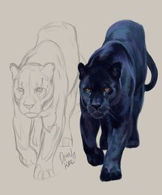 Animal Sketches, Art Drawings Sketches, Animal Drawings, Illustration Art Dessin, Panther Cat, Lion Painting, Realistic Drawings, Cat Drawing, Wildlife Art