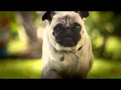 "DORITOS Unveils Superbowl Commercial ""Pug Attack"" - Page 2 of 2 - PawBuzz"