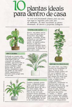 .plantas para interior. Garden Trees, Trees To Plant, Garden Plants, House Plants, Plantas Bonsai, Inside Garden, Plant Guide, Garden Deco, Home Vegetable Garden