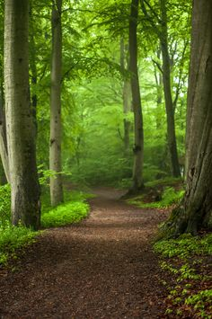 "silvaris: "" Forest path by Henrik Hansen "" Forest Path, Tree Forest, Forest Trail, Forest Scenery, Beautiful Forest, Beautiful Places, Walk In The Woods, All Nature, Parcs"