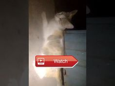 😸 Funny Cats A Funny Cat Videos Compilation NEW HD 😼 Funny Cats A Funny Cat Videos Compilation NEW HD 😽 from Pet Lovers 😻