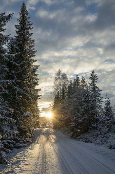 Winter road by Lake Ånøya, just outside Trondheim, Norway.