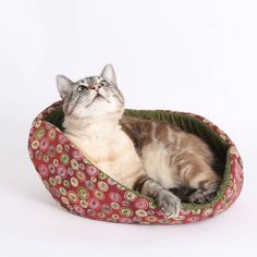 Cat Canoe Modern Style Pet Bed Burgundy and Green Circles