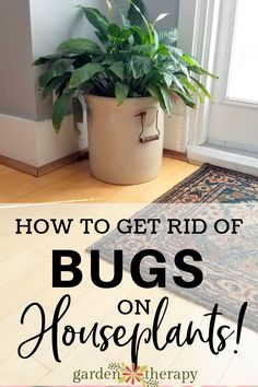 How to Prevent, Identify, and Get Rid of 8 Common Houseplant Pests. Help prevent, identify, and get rid of houseplant pests before they do too much damage. #gardentherapy #houseplants #indoorgardening - Green Friends for Our Home  IMAGES, GIF, ANIMATED GIF, WALLPAPER, STICKER FOR WHATSAPP & FACEBOOK