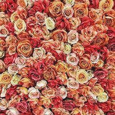 So. Many. Roses. Thi