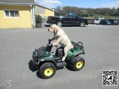 Dogs driving cars - Animal pic