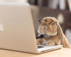 Meet PuiPui The Adorable And Stylish Bunny - World's largest collection of cat memes and other animals Cute Baby Bunnies, Funny Bunnies, Cute Funny Animals, Cute Baby Animals, Animals And Pets, Rabbit Pictures, Baby Pictures, Tier Fotos, Cute Creatures