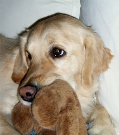 this is MY teddy!!!