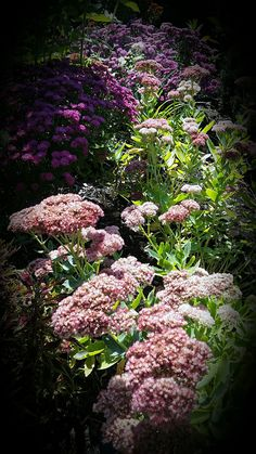 An artistic view pf plants through the camera lens   FineGardening