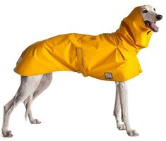 IMPORTANT: Greyhound Rain Coats by VoyagersK9Apparel on Etsy
