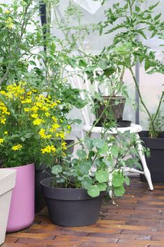 So many plants, so little space. Same problem every year. Space, Plants, Outdoor, Floor Space, Outdoors, Plant, Outdoor Games, The Great Outdoors, Planets