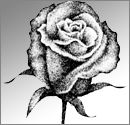 Make Rose Drawings Child's Play