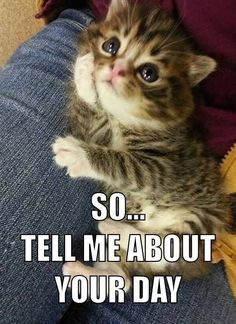 TOP 35 Funny Cats and Kittens Pictures | Funny Animals Funny Cat | DomPict.com