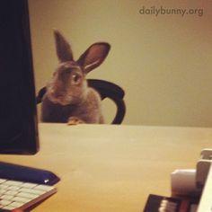 "Hilarious. ""Bunny is hard at work at the Bunny Business Bureau - May 23, 2014"""