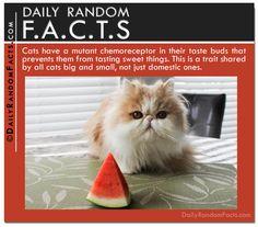 Top 20 Random Facts