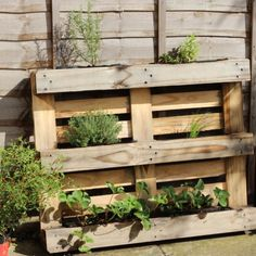 How to recycle and old pallet into a cheap, space saving herb planter - perfect for small gardens or balconies!