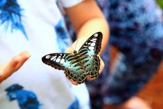 Tours of the Merlin Butterfly Sanctuary are available every Monday, Wednesday and Fridays at am. Children and adults can learn about the butterfly life-cycle and see many species. Family Friendly Resorts, Butterfly Life Cycle, Phuket, Resort Spa, Merlin, The Locals, Wednesday, Tours, Children