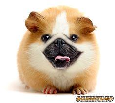 Photoshopped Animal Hybrids | Yikes, these animal hybrids are so hilariously terrifying