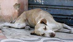 O Noticiario RN: Juazeiro do Norte (CE): Animais são estuprados na ...