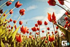 #summer #flowers #red #green #light #sun #geometria
