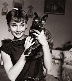 vintage cat faces