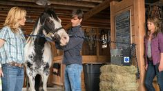 Every Thursday I will have some news and photos for you dedicated fans of Heartland, television's favourite family drama. Heartland Season 9, Heartland Quotes, Heartland Cbc, Cartoon Network Adventure Time, Adventure Time Anime, Rodeo Events, Ty And Amy, Barrel Racing Horses, Hallmark Channel