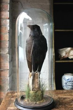 crow bell jar - Google Search