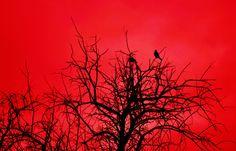 Red Sky 8x10 metallic print by MemoriesByTessa on Etsy, $60.00  photograph by Tessa Fritzler  copyright 2013