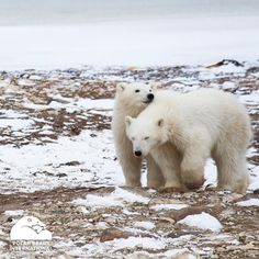 Look, Gladys... The ice is melting