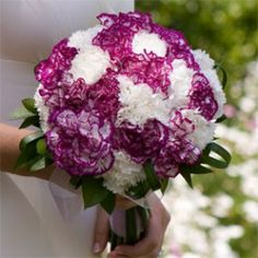 purple and white carnation bridal bouquet. I was thinking of using white roses instead of white carnations.