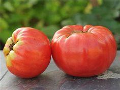 Abe Lincoln Original Tomato