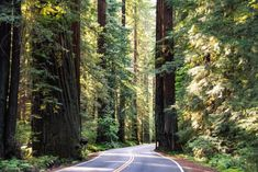 30 Most Beautiful Places to Visit in California - The Crazy Tourist Beautiful Places In The World, Beautiful Places To Visit, Most Beautiful, Yosemite National Park, National Parks, Humboldt Redwoods State Park, Yosemite Falls, New River, Natural Wonders