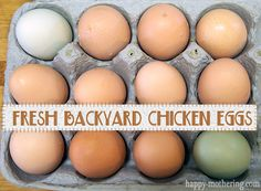 Fresh Eggs, Every Day, from Our Backyard Chickens