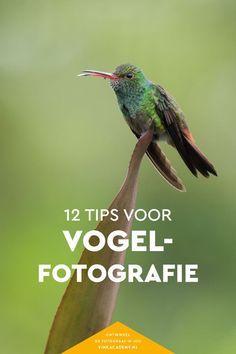 12 fotografietips voor vogels. Van kleine vogels tot grote vogels, in dit artikel lees je handige tips die je direct in de praktijk kunt brengen bij vogelfotografie!