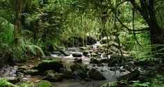 Ranomafana-river http://pioneerexpeditions.com/index.php/madagascar-adventure-honeymoon/