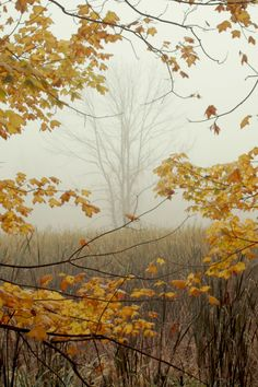 expressions-of-nature: Framing October, Cuyahoga Valley National Park, Ohio by wood_owl