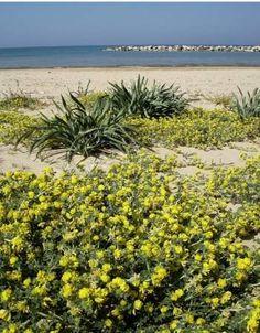 The beautiful wild beaches of the south coast, Abruzzo Italy