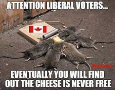 Bernie Sanders - the cheese is never free! Liberal Logic, Stupid Liberals, Liberal Democrats, Conservative Politics, Socialism, Funny Pictures, Humor, Shit Happens, Bernie Sanders