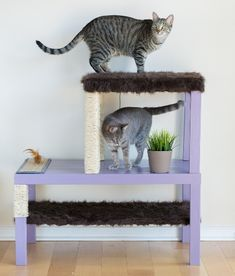 Make a homemade cat condo! Learn how to make an aesthetically pleasing DIY cat tree using Ikea tables. Ikea Cat, Ikea Lack Table, Animal Gato, Diy Cat Tree, Cat Hacks, Cat Scratching Post, Cat Condo, Cat Furniture, Painted Furniture
