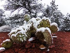 Traveling in Arizona in the winter - what does it look like?