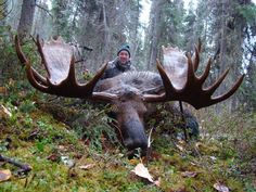 Alaska Moose Hunting  OUTDOORSMAN.com